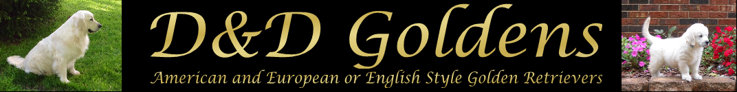 D & D Goldens